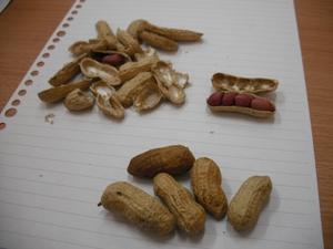 ウズベキスタンのピーナツ