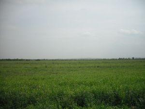フェルガナの田園風景