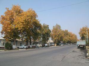 大学前の道路
