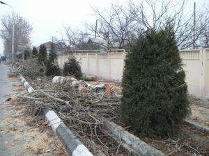 切られた街路樹