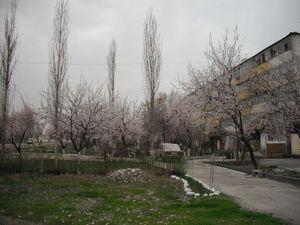 フェルガナの春