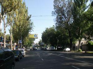 街路樹が多い