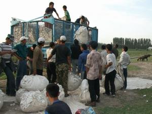 綿花をトラックに積み込む