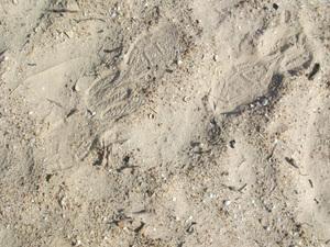足元の貝殻
