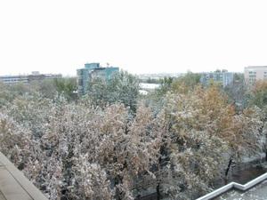 首都タシュケントにも雪が降った