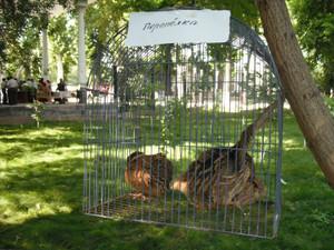 籠の中の鳥(ウズベキスタン)